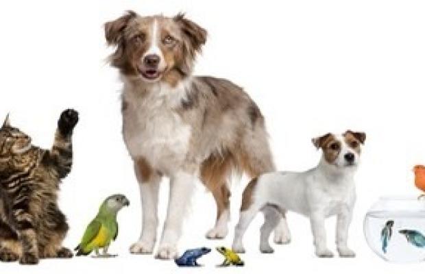 La garde des animaux de compagnie dans la procédure de divorce.
