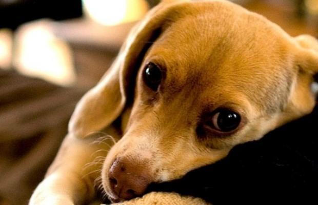 Que devient votre animal de compagnie en cas de divorce ?