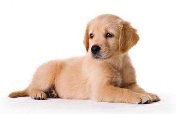 le sort des animaux lors d'une séparation ou d'un divorce.